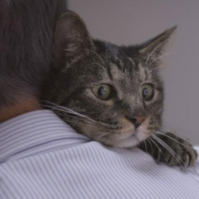 고양이는 결코 집사를 잊지 않는다