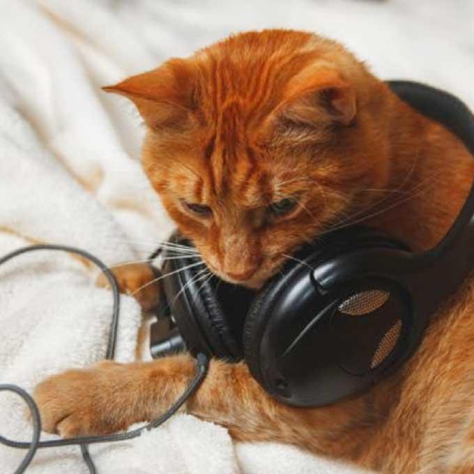고양이를 떠나 보낸 사람들을 위한, 'MECAT-SHIMA 헤드폰'