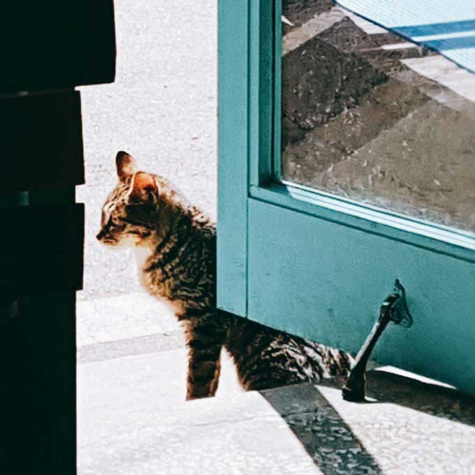 따듯한 품이 그리운 길고양이 대박이