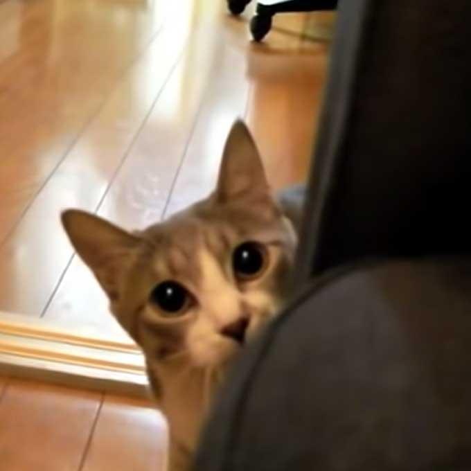 고양이와 '무궁화꽃이피었습니다' 놀이를 할 수 있는 이유