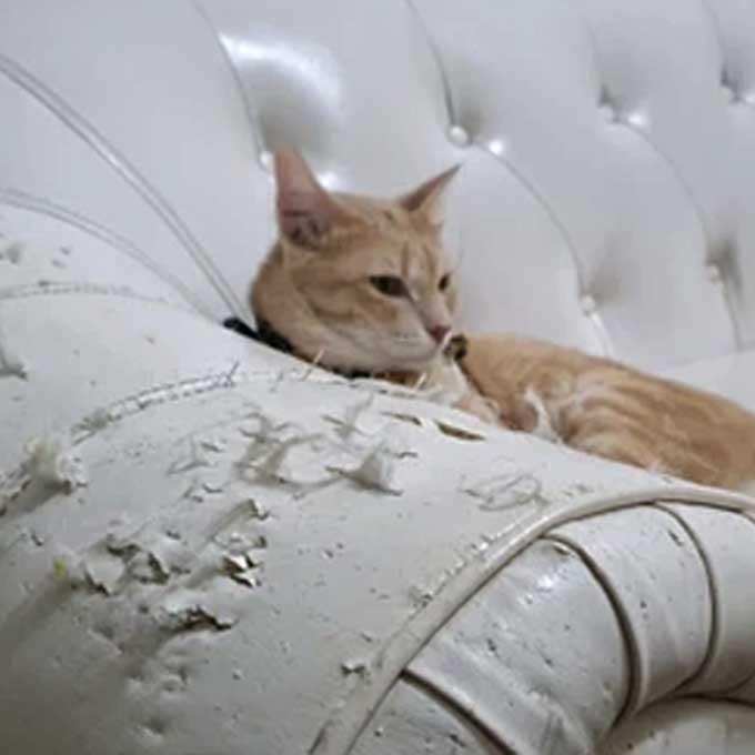 Q. 왜 하필 고양이는 그 비싼 소파에 스크래처를 할까