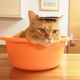 Q. 고양이는 정말 물을 싫어할까?