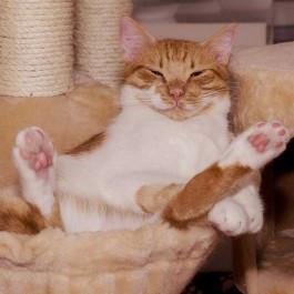 Q. 분리불안증 겪는 고양이 위해 집사가 할 수 있는 것 5