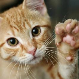 Q. 고양이가 앞발로 집사를 툭툭 칠 때 심리