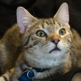 Q. 귀신 본거임? 집사를 섬뜩하게 하는 고양이 행동에 대해